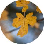 automne photo