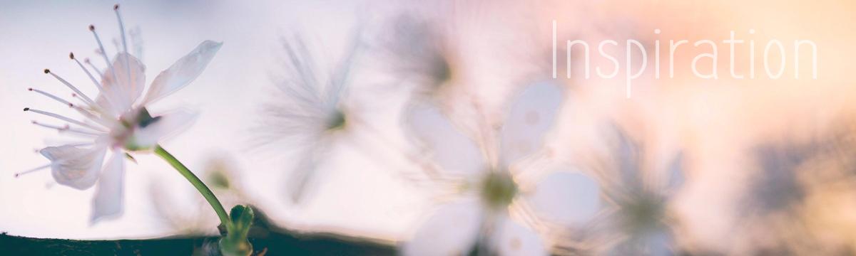 diaporama-accueil-03